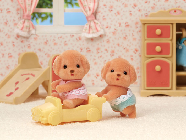 Toy Poodle Twins - 3